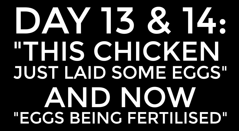 """DAY 13 & DAY 14: """"this chicken just laid some eggs"""""""