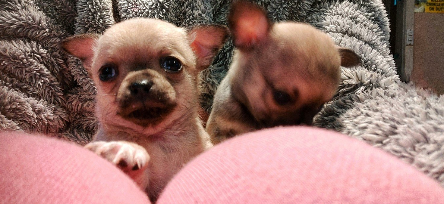 3 Ways To Get Ready for a New Puppy   Style & Life by Susana