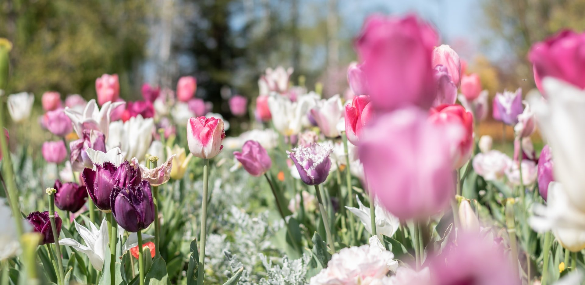 How to Get Your Garden Ready for Summer   Style & Life by Susana